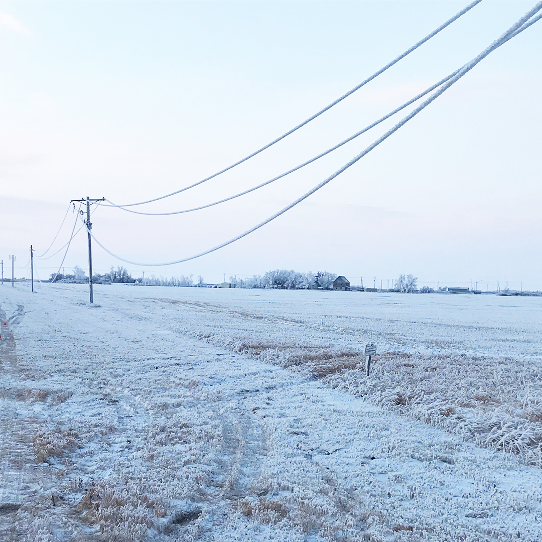Power lines with frost on line