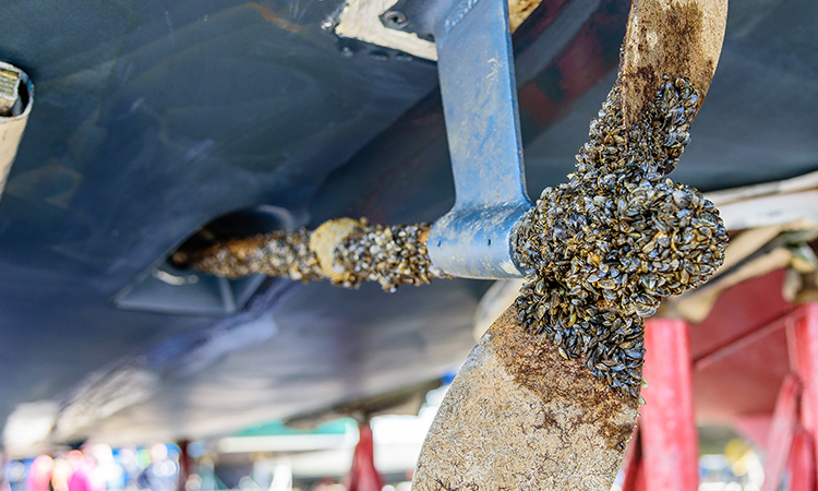 5 Questions about Zebra Mussels