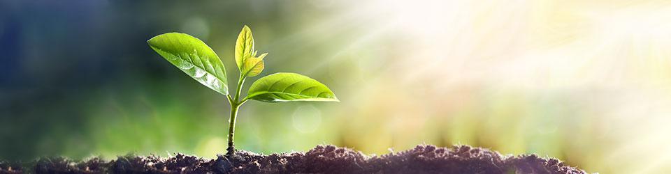 Apply For Free Seedlings