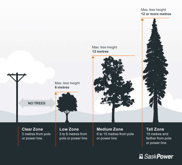 Trees And Power Line Safety